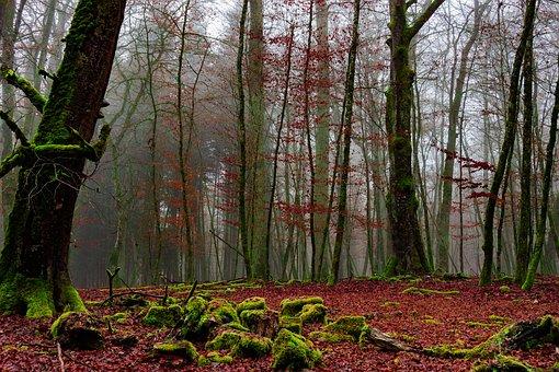 Forest, Cold, Forests, Nature, Landscape, Autumn, Log