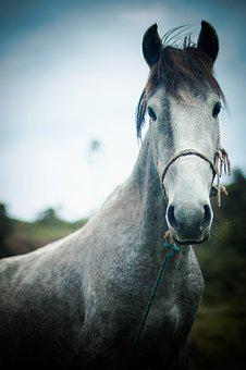 Horse, Force, Purity, Greatness, Momentum, Nature