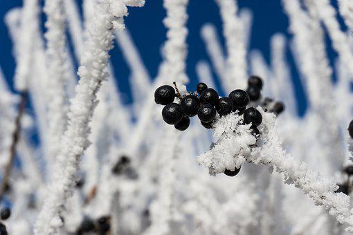 Snow, Ice, Gefrohren, Icicle, Winter, Cold, Frost