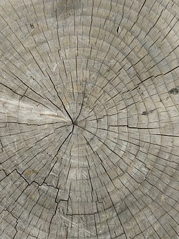 Tree Rings, Wood, Stump