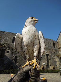 Valk, Bird, Falconer, Castle, Bouillon, Ardennes