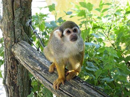 Monkey, Monky, Marmoset, Zoo
