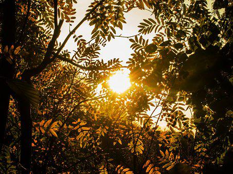 Gold, Autumn, Rowan, Yellow Leaves, Leaves Mountain Ash