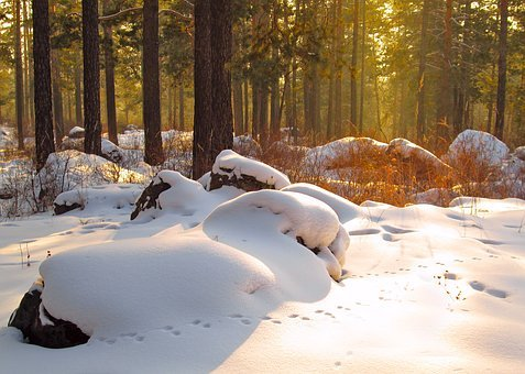 Nature, Winter, Snow, Landscape, Trees, Tree, Cold