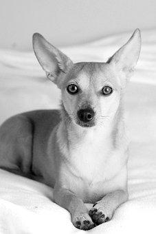 Eb, Dog, Animal, Pets, Nature, Cute, Four-legged, Ear