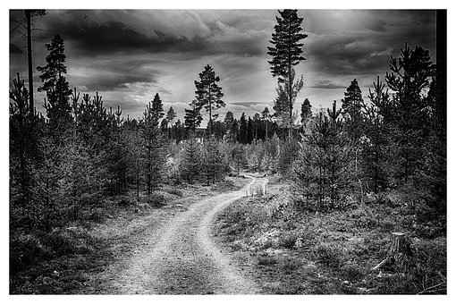 Forest, Forest Road, Thread, Himmel, Black, White