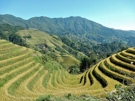 Longji, Rice Terraces, Rice Fields, Nature, Mountains