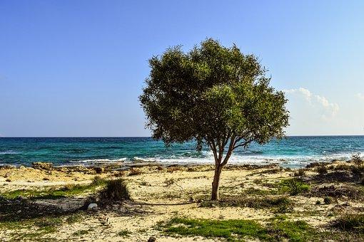 Tree, Beach, Sea, Scenery, Nature, Alone, Isolated