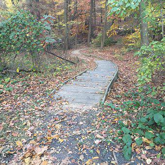 Steps, Nature, Outs, Outdoor, Ground, Tree, Green, Path