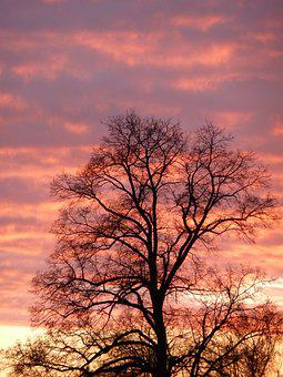 Dusk, Tree, Red, Night, Beautiful, Branches, Glow