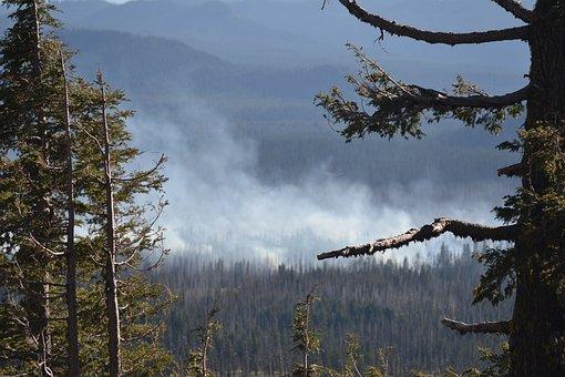 Wild Fire, Forest Fire, Oregon, Forest, Fire, Wild