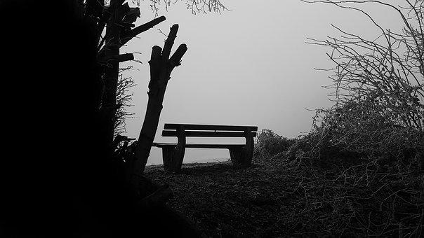 Bank, Fog, Nature, Rest, Trees, Mood, Forest, Break
