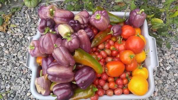 Vegetables, Organic, Garden, Food, Healthy, Fresh