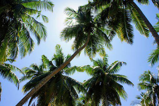 Palm Trees, Blue Sky, Sky, Green, Clouds, Partly Cloudy