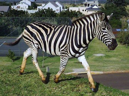 Zebra, South Africa, Wildlife