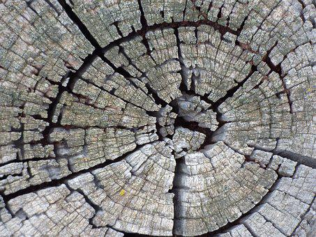 Trunk, Old, Rings, Age, Wood, Cross-section