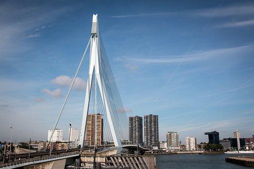 Rotterdam, Bridge, City, Netherlands, Erasmus Bridge