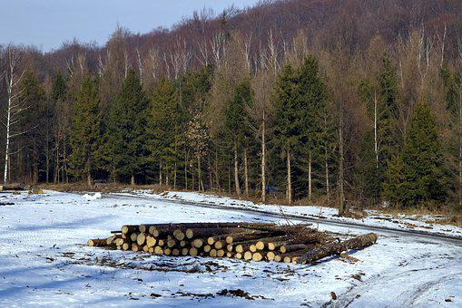 Wood, Felling Of The Forest, Felling