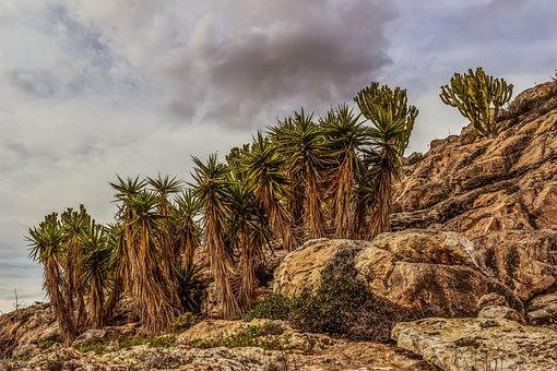 Cliff, Rock, Cactus, Landscape, Nature, Formation