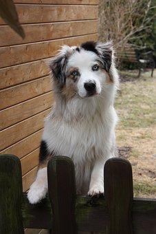 Dog, Garden Fence, Welcome