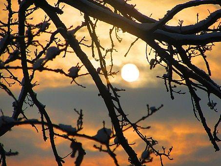 Sunrise, Oak Tree, Branches, Tree, Natural Beauty
