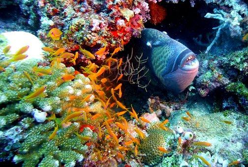 Fish, Trigger, Triggerfish, Underwater, Sea, Ocean