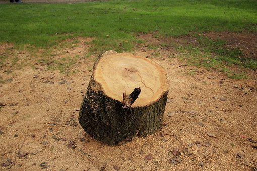 Trunk Cut, Square, Trunk, Wood, Tree, Cut, Natural