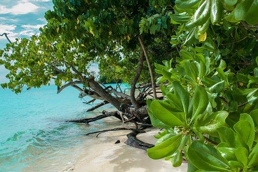 Island, Sea, Ocean, Travel, Beach, Summer, Tropical