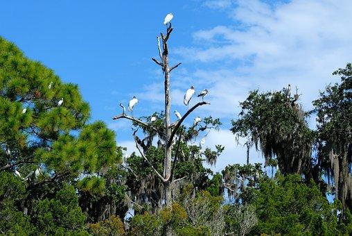 Tropical Birds, Herons, Egret, Bird, Wildlife, Wetland