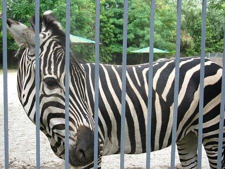 Zoo, Nature, Beasts, Animals, Living Nature, Giraffe