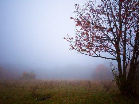 Tree, Autumn, Fog, Golden Autumn, Light, Fall Color