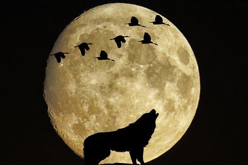 Mystical, Moon, Full Moon, Birds, Wolf, Moonlight