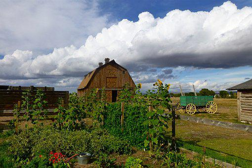Farm, Survival, Barn, Red, Wyoming, Corn, Garden