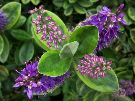 Flower, Leaves, Green, Purple, Leaf, Floral, Nature