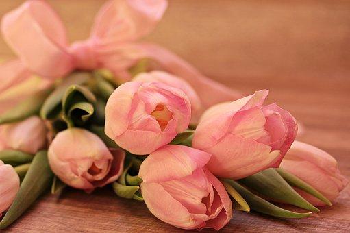 Tulips, Tulipa, Flowers, Schnittblume, Breeding Tulip