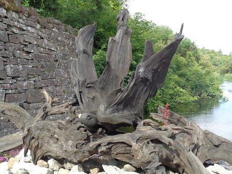 Nature, Tree Roots, Ireland, Artwork, Wood Bird