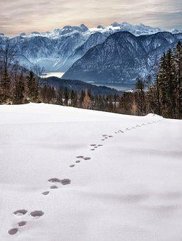 Wintry, Snow, Traces, Winter Magic, Winter, Cold, Snowy