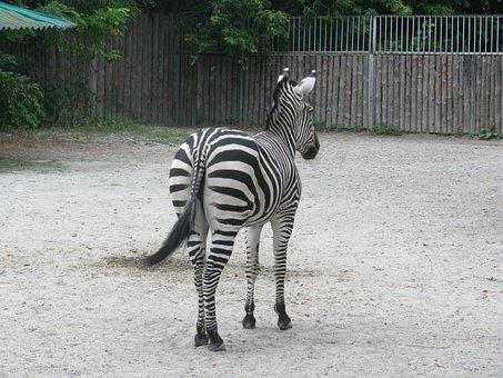 Giraffe, Zoo, Africa, Animals, Nature, Living Nature