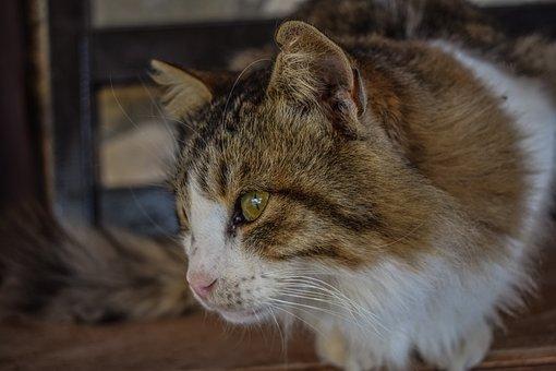 Cat, Stray, Homeless, Animal, Eyes, Face, Street, Cute