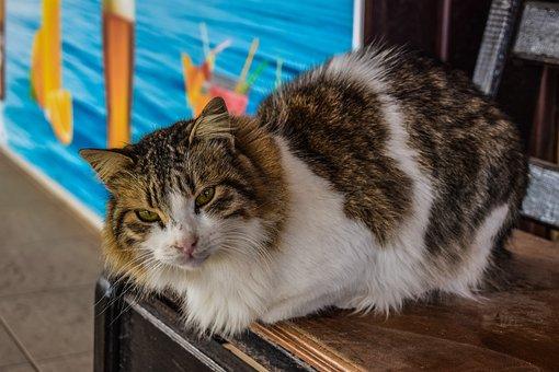 Cat, Stray, Homeless, Animal, Eyes, Face, Sitting