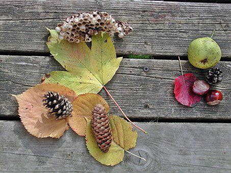 Autumn, Fruits, Fund, Nature, Autumn Decoration