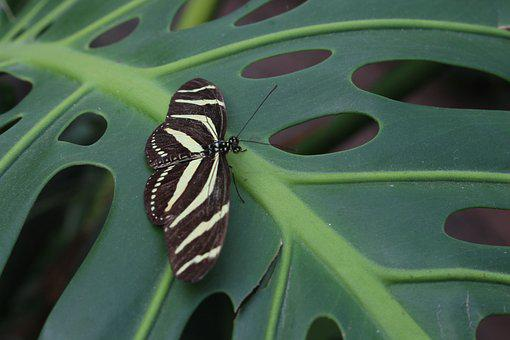 Butterfly, Leaf, Tropical, Insect