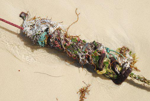 Rope, Cord, Leash, Dew, Knot, Rot, Old, Sand, Beach