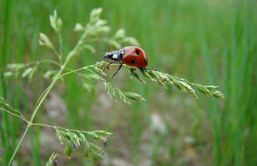 Macro, Summer, Insect, Ladybug, Nature