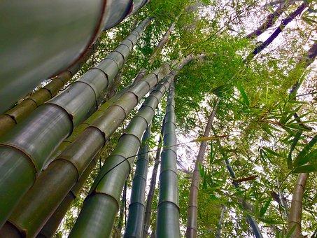 Bamboo, Stalks, Green, Plant, Asia, Garden, China, Zen
