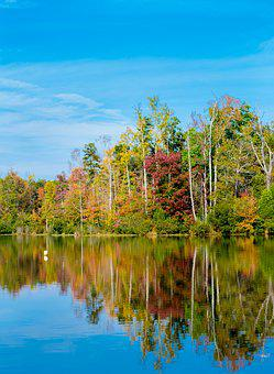 Park, Reflection, Water, Trees, Autumn, Fall, Nature
