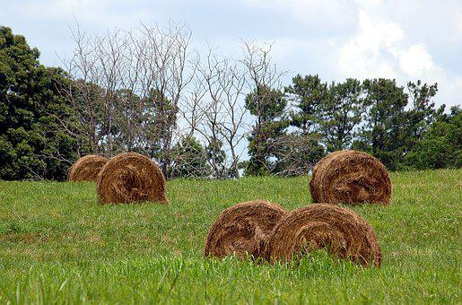 Bales Of Hay, Rural, Agriculture, Fall Season, Field
