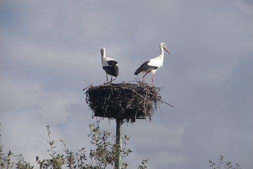 Nest, Birds, Stork, Bird, White Stork