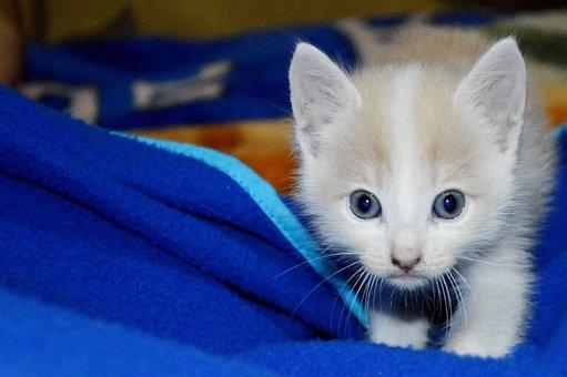 Cat, Kitten, Pussycat, Newborn Infants, Feline, Pet