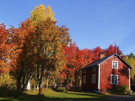 Autumn, Colors, Rowan, Cottage, Blue, Himmel, Nature